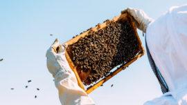 p12-apicultura